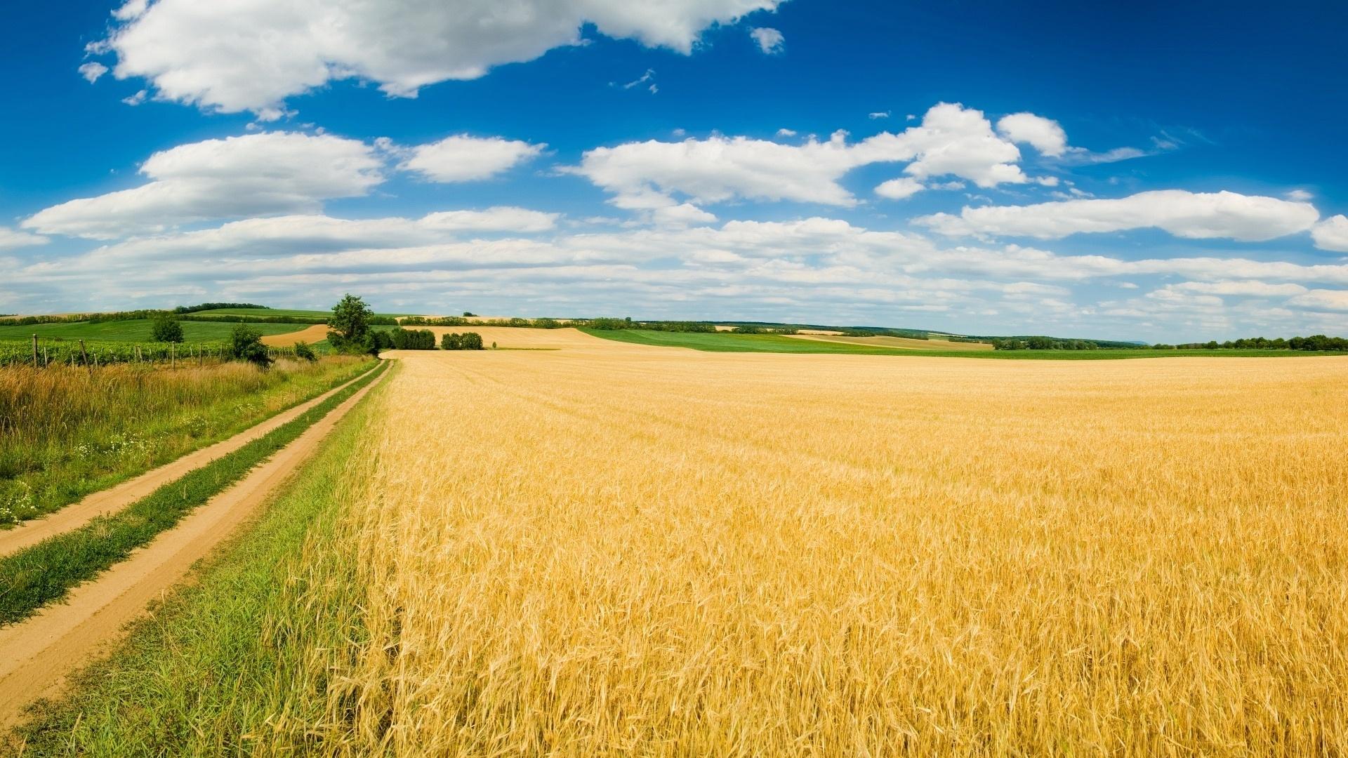 Mignini una nuova fattoria didattica per avvicinare i for Piani del granaio di campagna